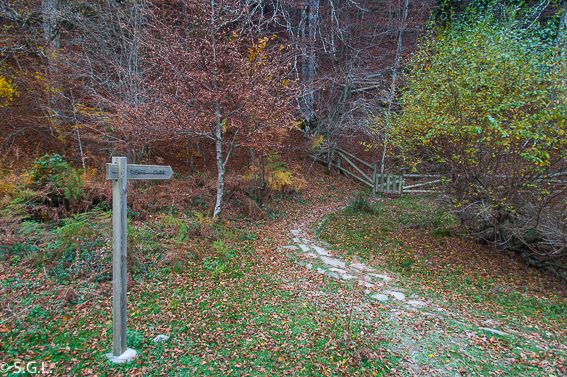 La Selva de Irati.
