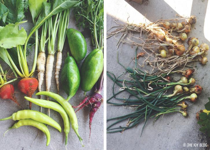 Summer Garden Harvests // Veggie Garden Updates: Mid Summer 2018 | www.thejoyblog.net