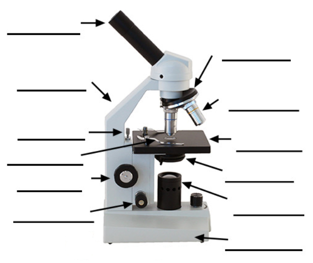 Parts of a Simple Microscope - Labeled (with diagrams ...