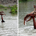 Heroic Boy Saving A Drowning Baby Deer Is Possibly One Of The Greatest Rescue Stories Ever