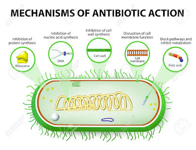 Fleming is bactericidal to a wide range of organisms including: Gram-positive and gram- negative bacteria.