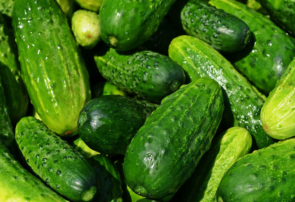 12 Unbelievable facts about Health Benefits of Cucumber