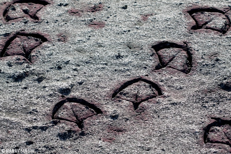 Interesting Footprints of Flamingos.