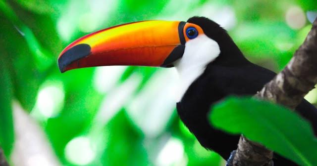 Costa Rica es el primer país del mundo en cerrar los zoológicos y liberar a los animales