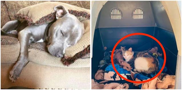 Собака позволила кошке родить котят в своей будке, а сама спала на земле