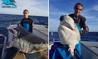 Μυστήριο με γιγάντιο αποκεφαλισμένο καρχαρία