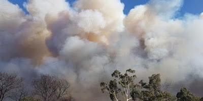 النيران تلتهم الأخضر واليابس فى غابات سيدنى الأسترالية