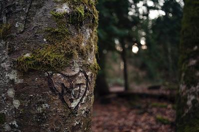 Iniciales dentro de un corazón grabadas en la corteza de un árbol