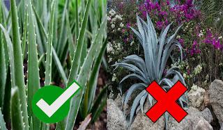 7 Amazing uses of Aloe Vera in Kannada   ಆಲೋವೆರಾದಿಂದಾಗುವ 7 ಅದ್ಭುತ ಲಾಭಗಳು   Benefits of Aloe Vera