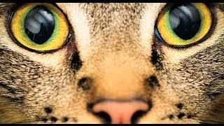 Hogy látják az állatok a világot?
