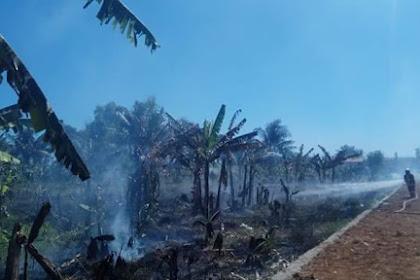 Kembali Terjadi Kebakaran di Lahan Produktif Pangandaran