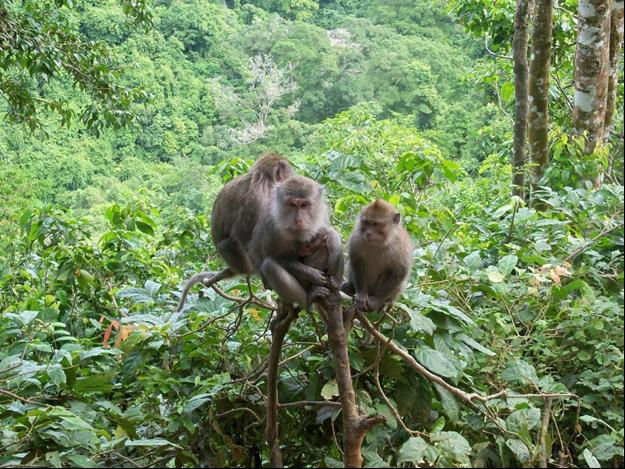 Wisata Lombok Yang Akan Membuatmu Ketagihan Hutan Monyet Pusuk