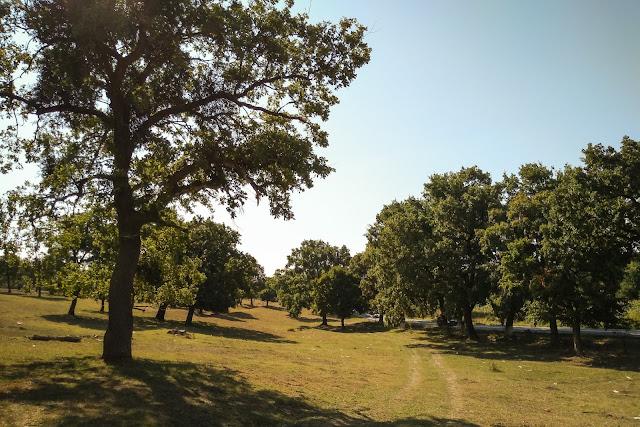 Padurea de stejari de langa Parches