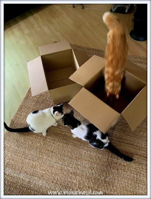 The Box Inspectors at Wurk at BBHQ Fudge Diving In  ©BionicBasil® The Pet Parade 375