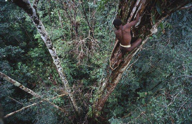 Korowai ή αλλιώς οι άνθρωποι των δέντρων
