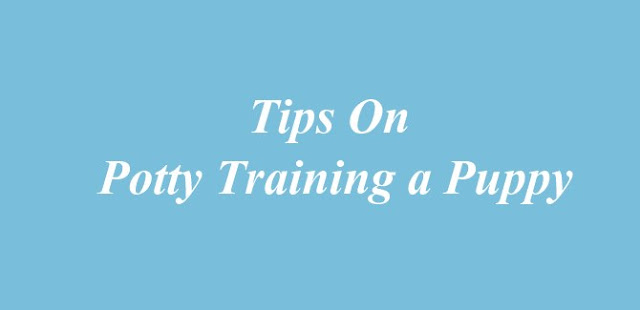 Tips on Potty Training a Puppy