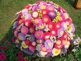 Осенние цветы в ландшафтном дизайне