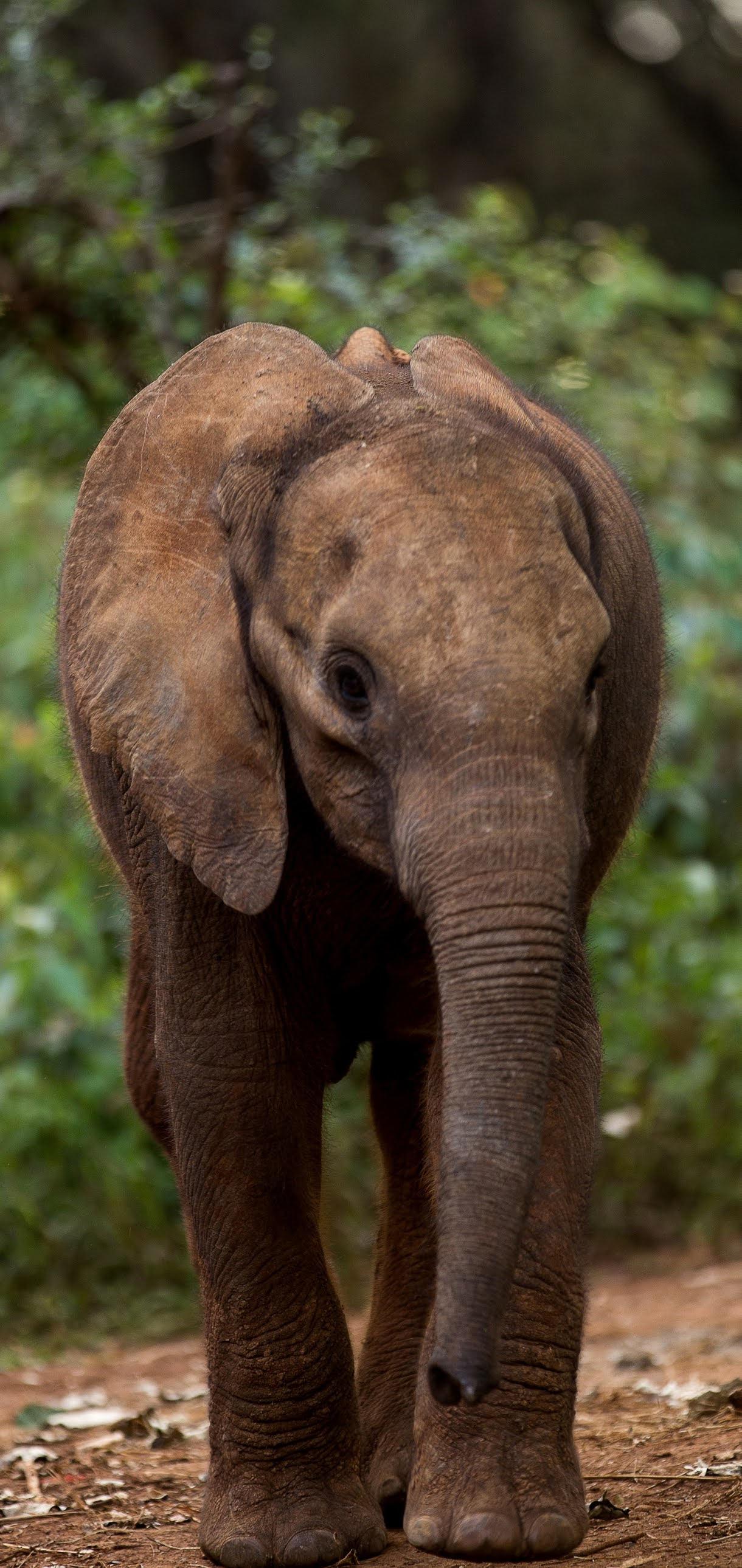 Picture of a baby elephant.