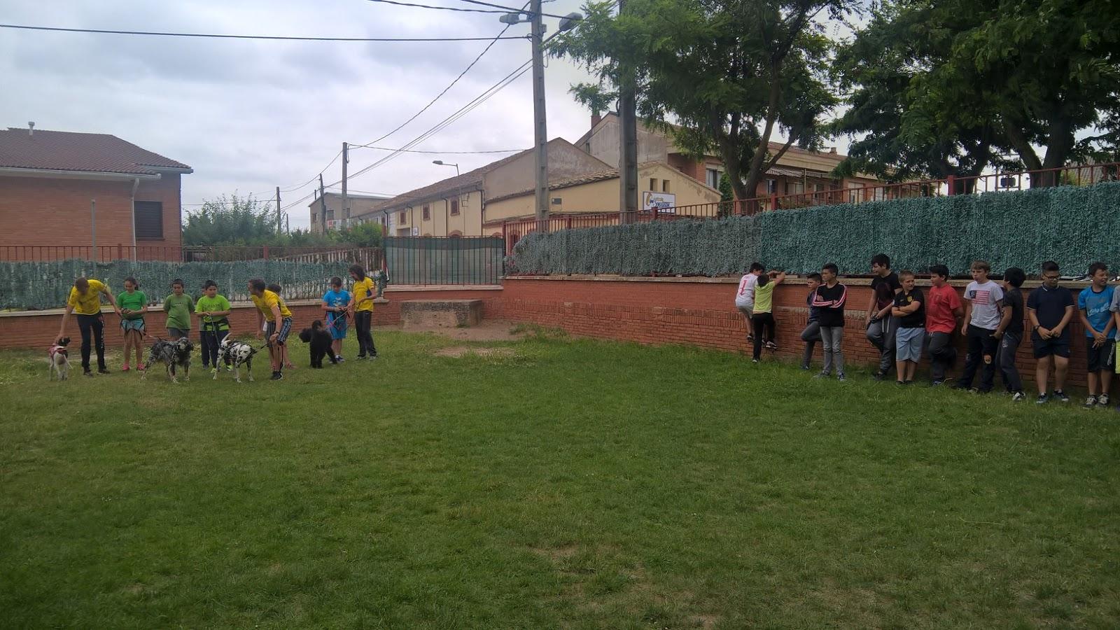club canicross 42
