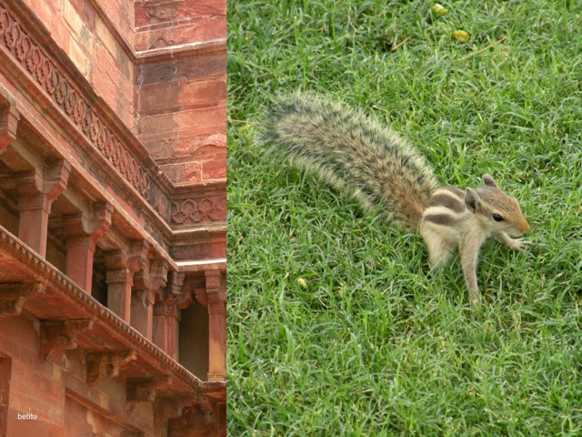 Indian palm squirrel at Agra Fort