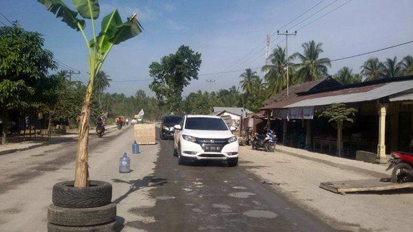 Tak Kunjung Diaspal, Warga Paguah Tanam Pisang di Tengah Jalan