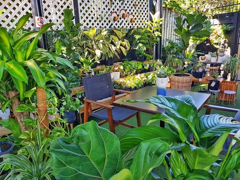 Leafy Theory Australia