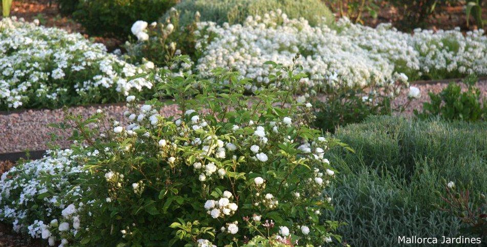 Gartendeko-Blog: Gartenideen - Pflanzen als Dekoelemente