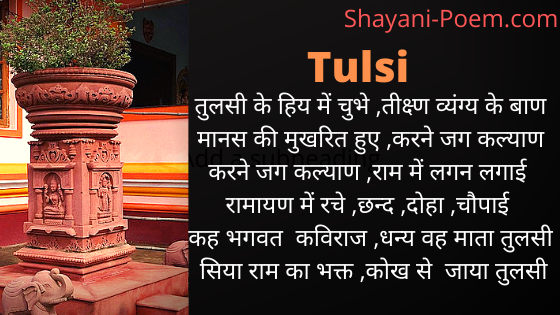 Poem Quotes on Tulsi plant in Hindi | 🌿तुलसी के पौधे पर कविता 🌿