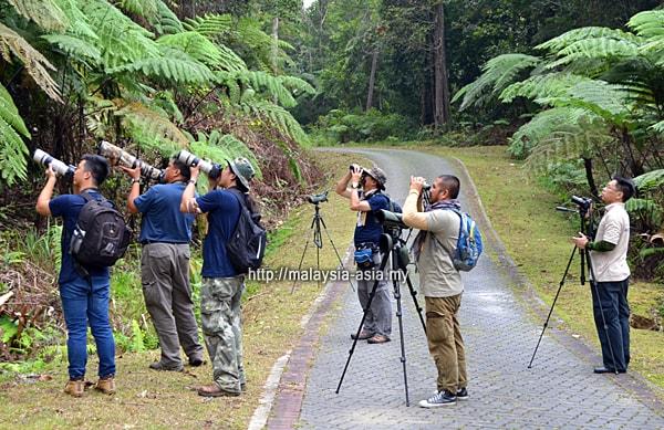 Sarawak Bird Watching Borneo