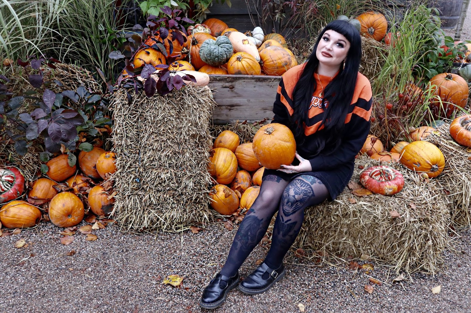 Pumpkins tivoli gardens halloween