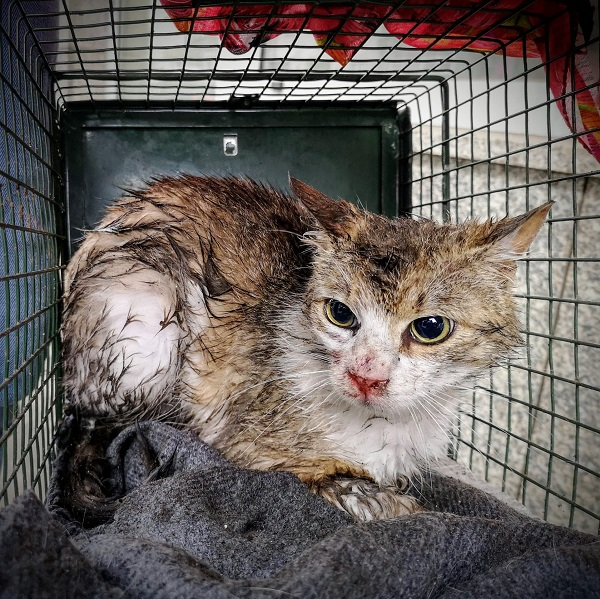 koty do adopcji Wroclaw