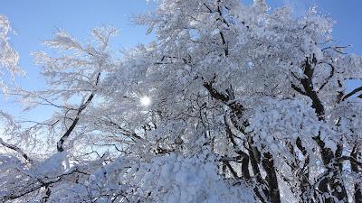 Verschneiter Baum mit durchscheinender Sonne