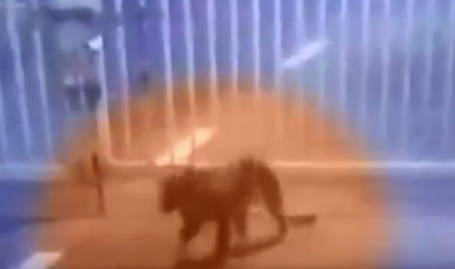 leopard gandhinagar sachivalay