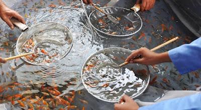 6 Jenis Ikan Hias Air Tawar yang Mudah dibudidayakan