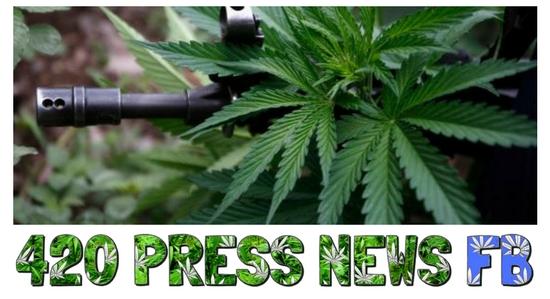 Cannabis Dispensary Raids