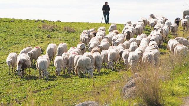 Θεσπρωτία: Άνοιγμα στην αγορά της Ιταλίας μπορούν να κάνουν Θεσπρωτοί κτηνοτρόφοι και τυροκόμοι