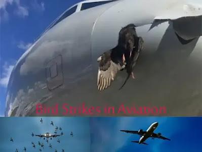 bird strike prevention