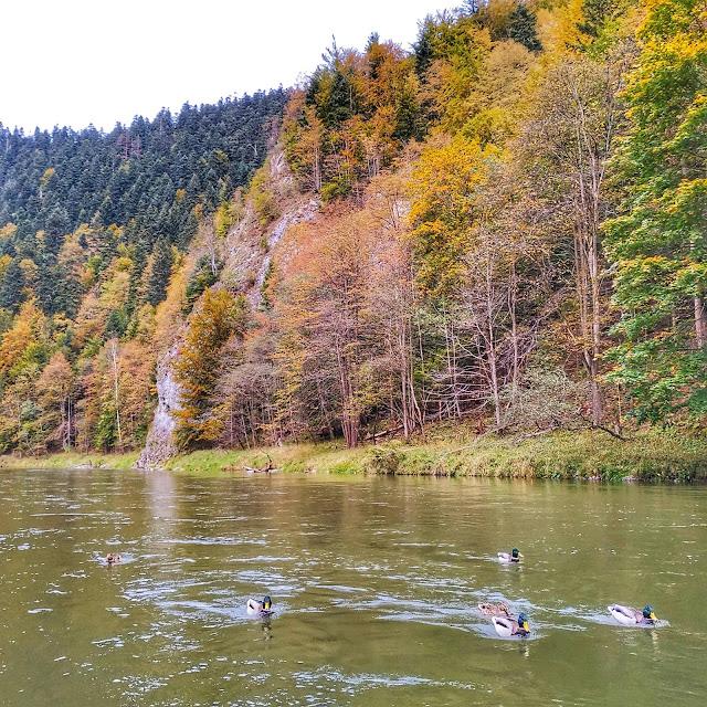 Pieniny, spływ, Dunajec, co robić w Szczawnicy,