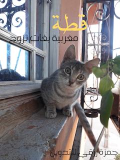قطة مغربة شريتها دارت ليا حالة فالدار بيت نبيعها