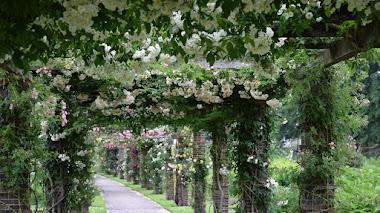 Rosedal y pérgola de rosas fragantes en Kew Gardens