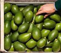 Logo Puoi vincere gratis forniture di avocado ( 4kg , e non solo)