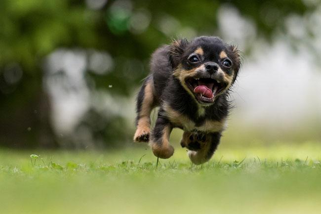 εκπαιδευση σκυλου να μη φευγει