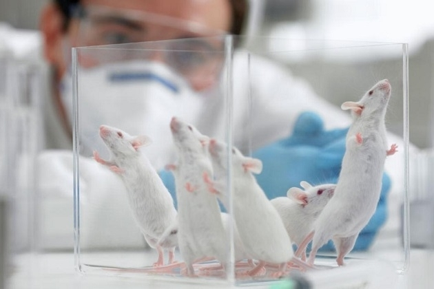 Inilah Alasan Kenapa Tikus Sering Jadi Bahan Percobaan Ilmiah