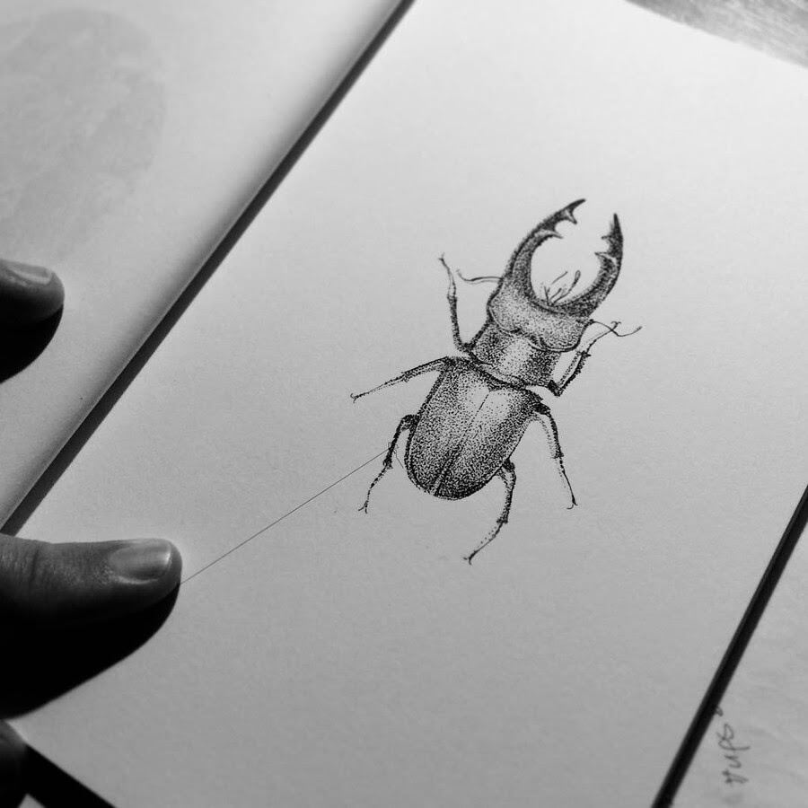 10-Stag-Beetle-Rostislaw-Tsarenko-www-designstack-co