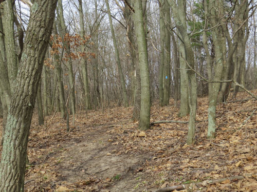 trail in hardwood forest
