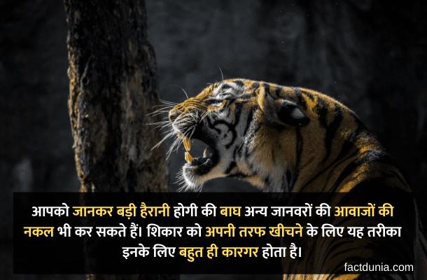 tiger information in hindi