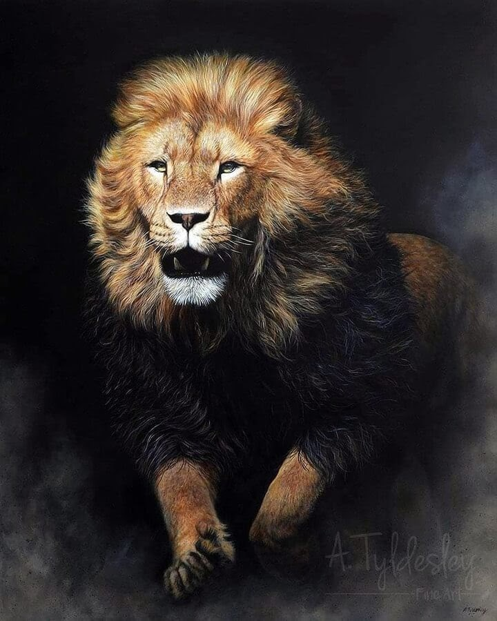 09-Lion-on-the-attack-Amber-Tyldesley-www-designstack-co