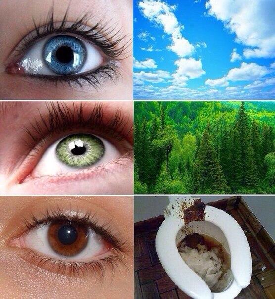 Witzige Bilder Augenfarben im Vergleich (blaue, grüne, braune Augen)
