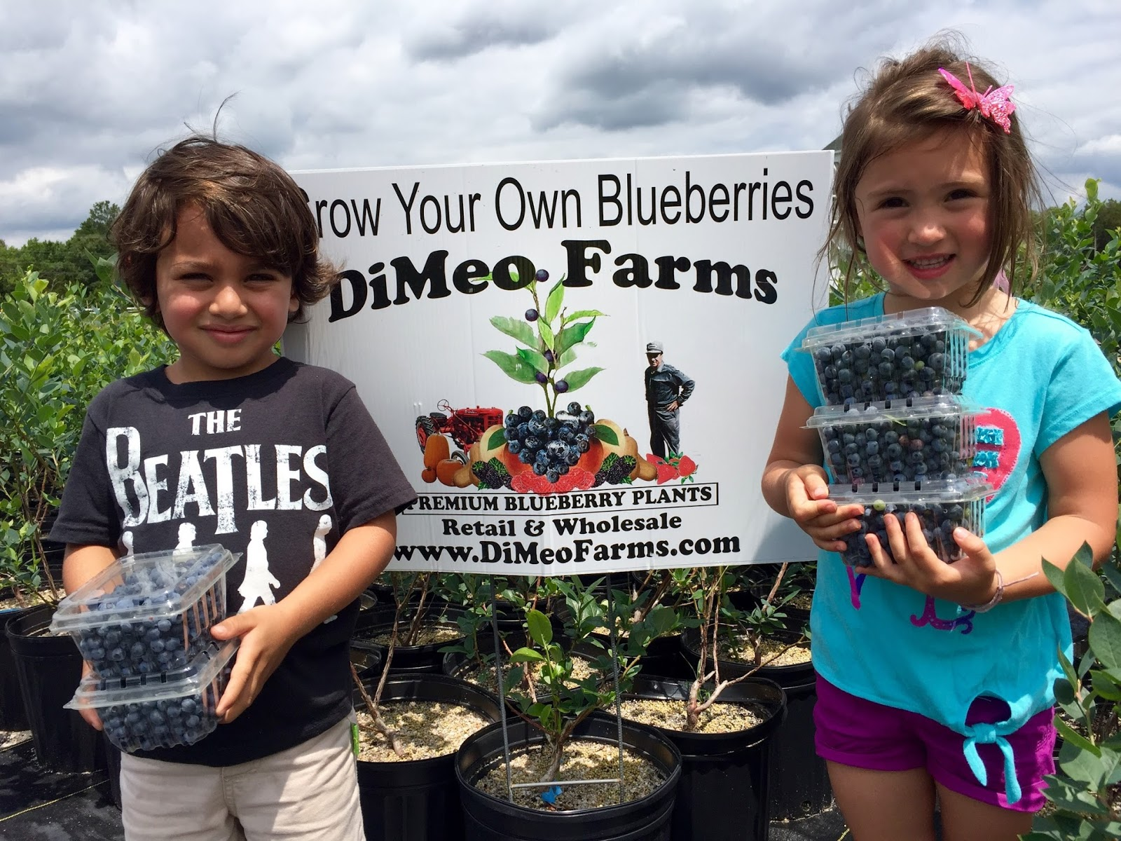 Large Blueberry Plants For Dimeo