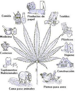 Plantas Medicianles